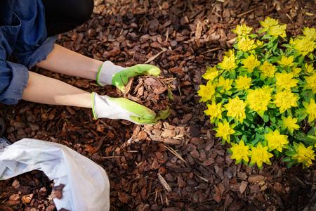 Gärtner mulchen Blumenbeet mit Kiefernrindenmulch