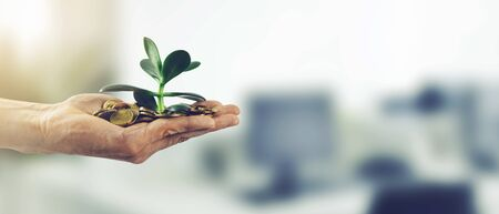 money investment business success concept. hand with coins and plant. copy space