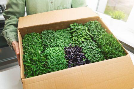 vegan food - woman holding cardboard box full of microgreens