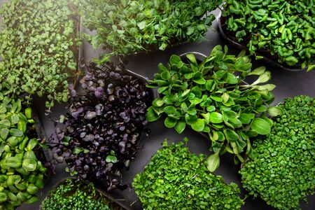 mix of fresh microgreens containers. top view Reklamní fotografie