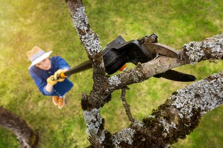woman cut old apple tree branch with telescopic tree pruner Standard-Bild