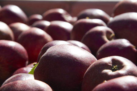 Bulk of Red Apples In the Wooden Box Stock Photo