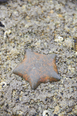 Die starfish on the rock with itself alone