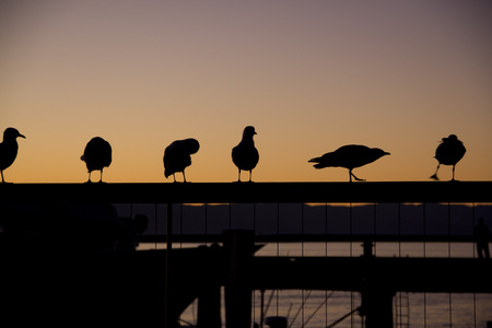 Six birds doing the different poses under sunset Stock Photo