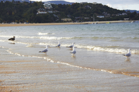 Five black billed gull & shore bird on the beach look to the sea Stock Photo