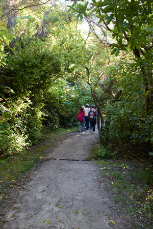 3 girls walking at national park surrounding by trees