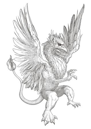 griffin: Griffin  Illustration