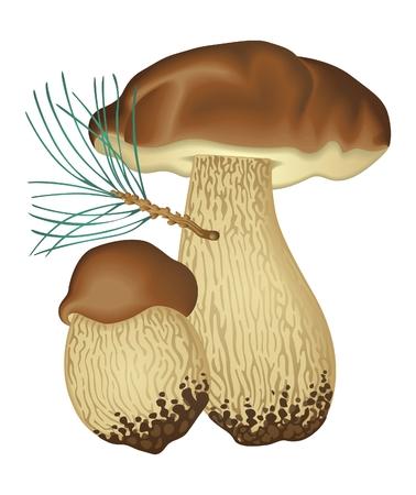 Mushrooms Squirrel bread   Vector