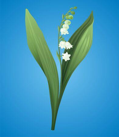 Lily of the valley Stock Vector - 8609658