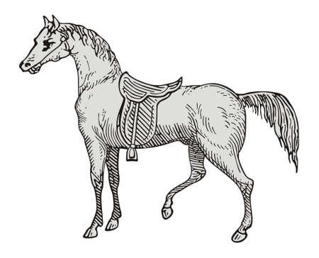 stirrup: Horse  Illustration