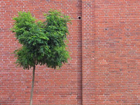 Wall made of red bricks with a tree