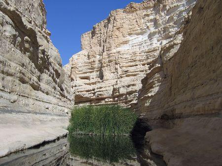 Ein Avdat - Negev Desert Israel - Desert Oasis  photo