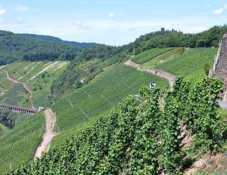 mosel: Vineyards grapes fields Mosel Germany