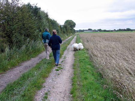 A couple in a dogs walk stroll in open fields Stock Photo - 2795375