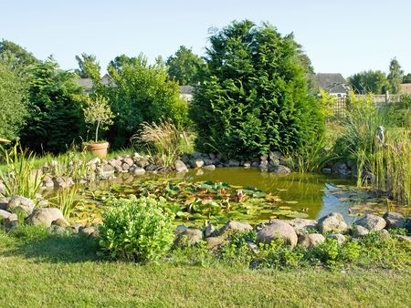 lilypad: Beautiful decorative home garden fish pond with water lilies