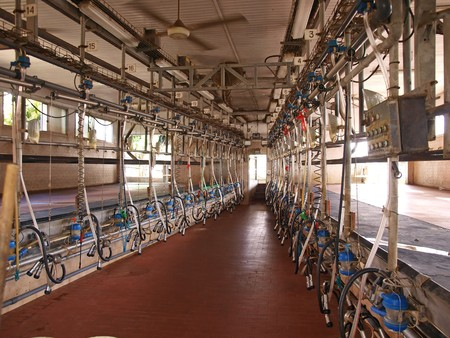 Modern computerized creamery milking parlour in a farm Stock Photo