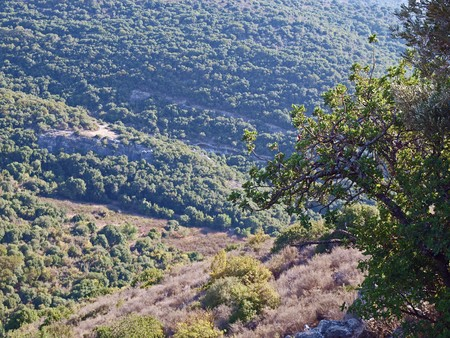 forested: Nature background - Forested Mountains landscape Gallilee Israel
