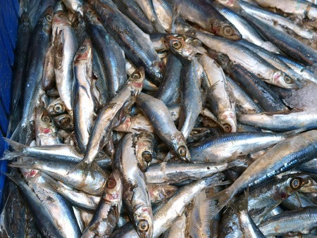 tiddler: Display of sardines in fish market