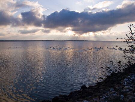 Mallard ducks fly over the sea ocean in a beautiful dramatic sunset photo