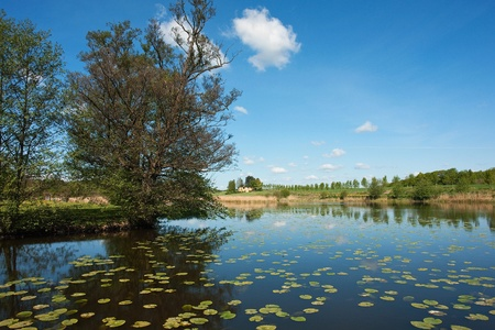 Silent beautiful lake with trees reflectection and water lilies Stock Photo - 10257819