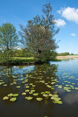 Silent beautiful lake with trees reflectection and water lilies vertical image Stock Photo - 10257821