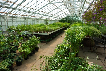 the greenhouse: Inside a plastic covered horticulture greenhouse of garden center selling flowers and plants Stock Photo