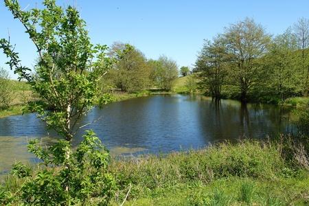 pastureland: Beautiful countryside lake pond summer landscape perfect nature background image