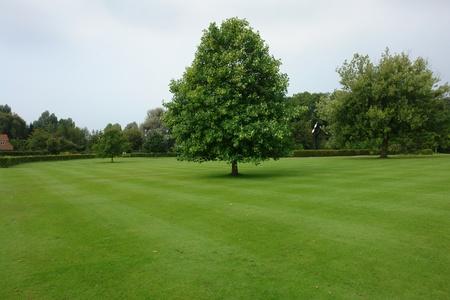 Beau parc jardin de ville avec pelouse verte luxuriante et les arbres Banque d'images