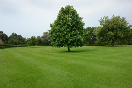 Beautiful city garden park with lush green lawn and trees