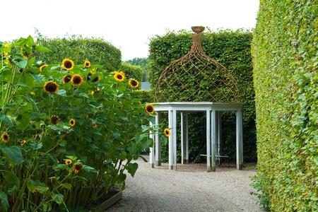perennial plant:  Beautiful decorative home garden yard gazebo pavilion made of wood and iron