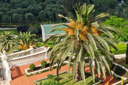 bahaullah: Details of the garden and palm trees in the Bahai Gardens Haifa Israel