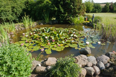 Beautiful Classical Garden Fish Pond With Blooming Water Lilies Gardening  Background Stock Photo   14264461