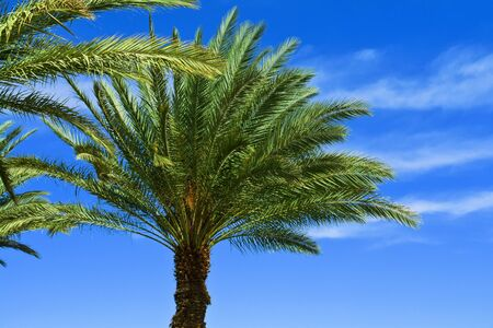 Beautifu lTropical exotic  Palm trees with clear blue summer sky Stock Photo - 14264460