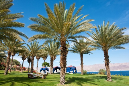 cycadaceae: Beautiful Tropical exotic  Palm trees in a tropical vacation resort