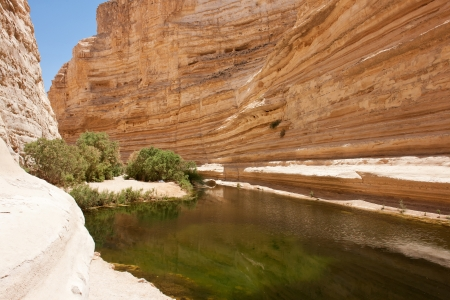 nature reserves of israel: Oasis in the desert Nature Reserve Ein-Ovdat Israel
