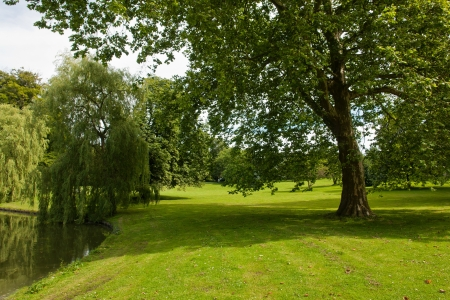 Beautiful green garden park with grass lawn and trees by a lake