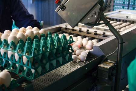 Eggs in a modern production line during sorting and packing Stock Photo
