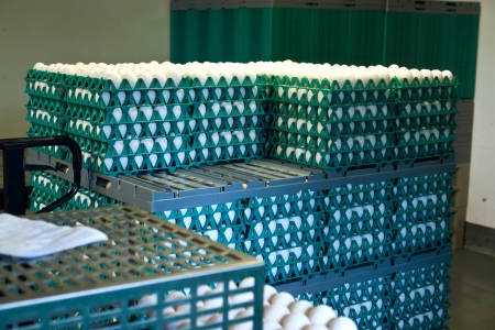 Boxes of farm eggs in a production poultry farm photo