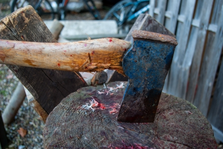 butchering: Axe of a  butcher on wood chopping board with drops of blood and feathers