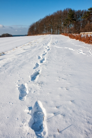 Footprints in deep snow out in nature - perfect winter background image photo