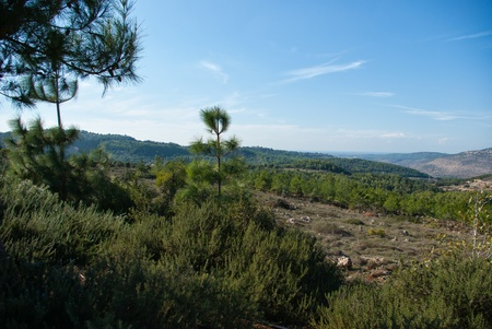 Typical nature viewl andscape of the Galilee area in Israel photo