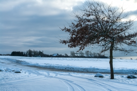 Winter landscape background - tree in the snow with a country road Stock Photo - 17085713