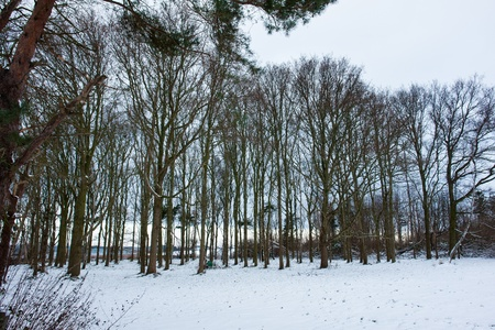 Winter landscape trees in a small forest covered with snow Stock Photo - 17085718