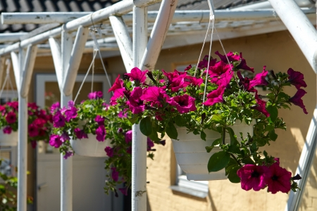 lowers:  Beautiful hanging flowerpot basket with red flowers in a garden