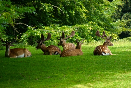 Group of grown male deer in a forest park safari
