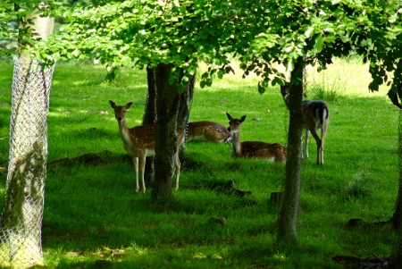 Group of grown young deer in a forest park safari photo