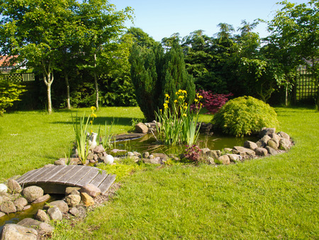 back yard pond: Beautiful classical garden fish pond surrounded by grass gardening