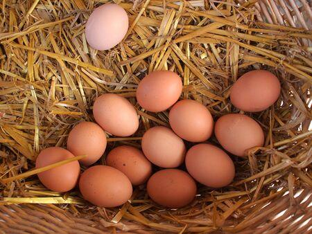 brown eggs: Fresh organic brown eggs basket in a market