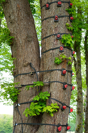 clambering: Climbing equipment tied to a big tree in an adventure sports activity park