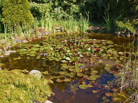 Beautiful Classical Garden Fish Pond Surrounded By Grass Gardening  Background Photo